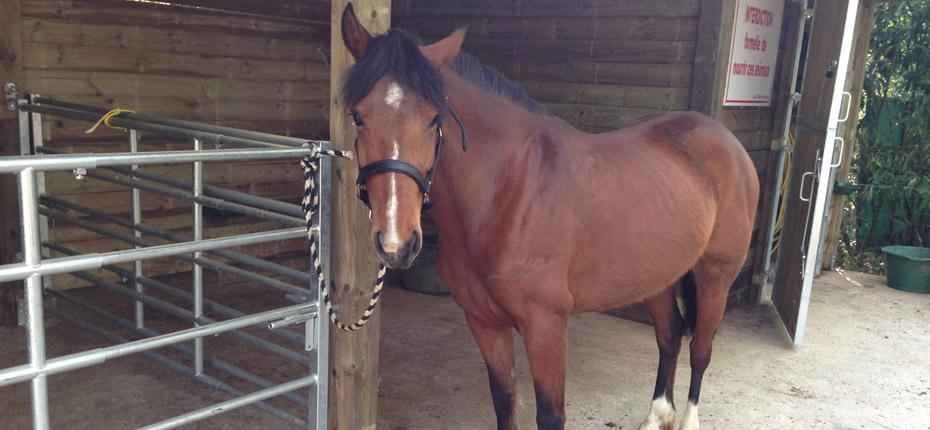 Admirez le cheval au camping des Yvelines