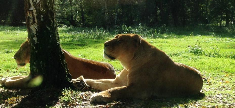 A 20 min du camping vous decouvrez le zoo de Thoiry